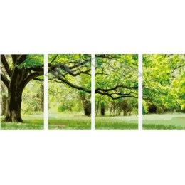 Вечнозеленое дерево