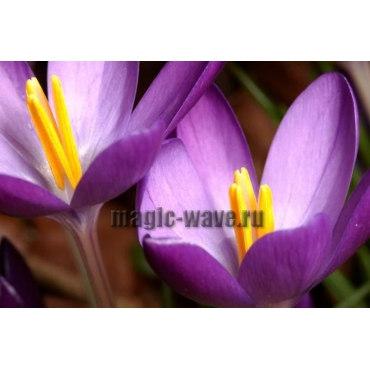Алмазная вышивка Первоцветы