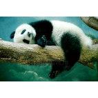 Алмазная вышивка Панда