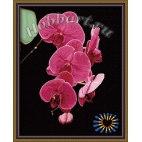 Утонченность орхидеи