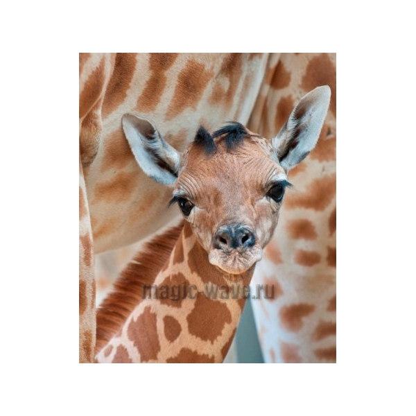 Алмазная вышивка Жираф