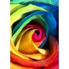 Алмазная вышивка Радужная роза