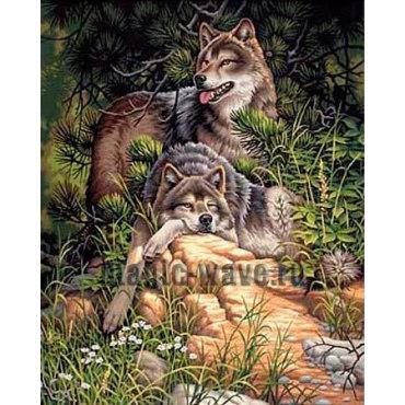 Дикие и свободные волки