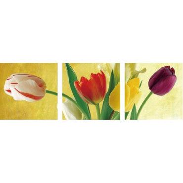Радуга тюльпанов