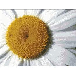 Алмазная вышивка Цветок ромашки