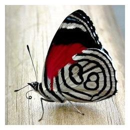 Алмазная вышивка Бабочка 1