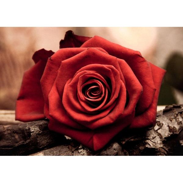 Алмазная вышивка Красная роза
