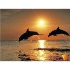 Алмазная вышивка Игры дельфинов