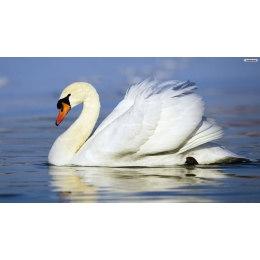 Алмазная вышивка Лебедь