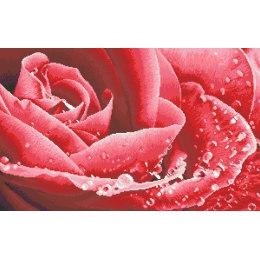 Алмазная вышивка Розовая роса