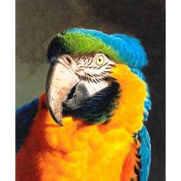 Алмазная вышивка Попугай