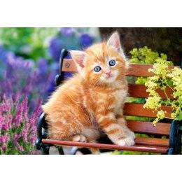 Котенок на скамейке