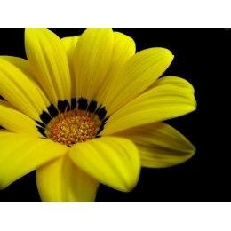 Желтый цветок- мозаика Милато