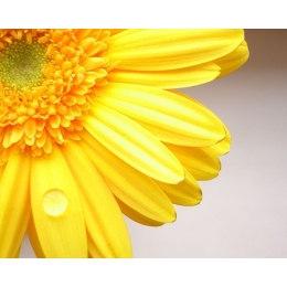 Солнечный цветок - мозаика Милато