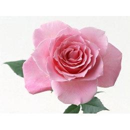 Алмазная вышивка Нежная роза