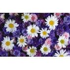 Алмазная вышивка Цветочный микс