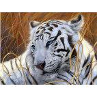 Алмазная вышивка Белый тигр