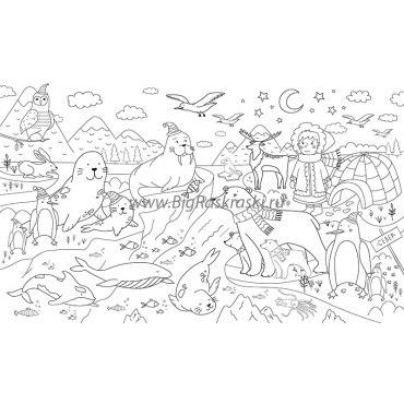 Плакат-раскраска «Животные севера» (60х100 см)