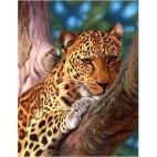 Леопард на отдыхе