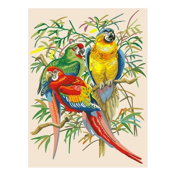 Тропические попугаи