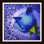 Алмазная вышивка Синяя роза