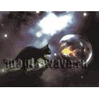 Черная кошка и золотая рыбка