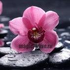 Алмазная вышивка Орхидея