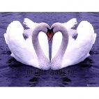 Алмазная вышивка Лебединая любовь
