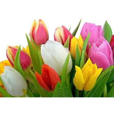 Алмазная вышивка Роса на тюльпанах