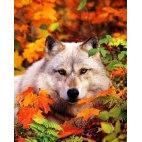 Алмазная вышивка Волк