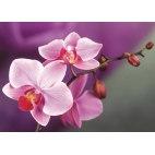 Алмазная вышивка Ветвь орхидеи