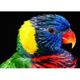 Алмазная вышивка Радужный попугай