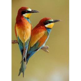 Алмазная вышивка Яркие птички