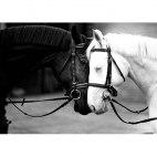 Алмазная вышивка Черная и белая лошадь