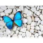 Алмазная вышивка Бабочка на камнях