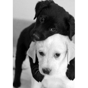 Алмазная вышивка Черный и белый щенок