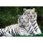 Алмазная вышивка Влюбленные тигры