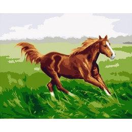 Лошадь в поле