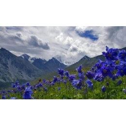 Алмазная вышивка Весна в горах