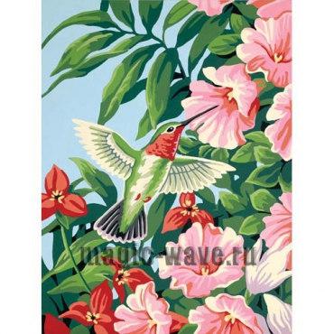 Колибри и фуксия