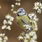 Алмазная вышивка Птах