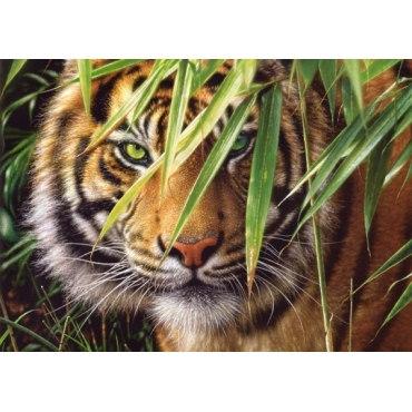 Пазл Тигр