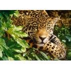Пазл Леопард
