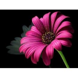 Пурпурный цветок - мозаика Милато