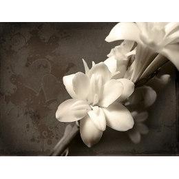 Алмазная вышивка Белые цветы