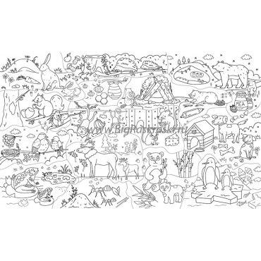 Плакат-раскраска «По следам животных» (60х100 см)