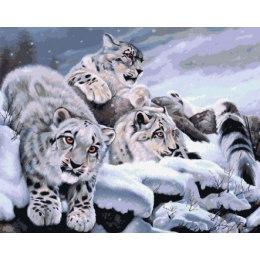 Снежные барсы