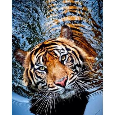 Алмазная вышивка Тигрица