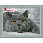 Алмазная вышивка Британский кот