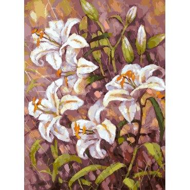 Нормандские лилии